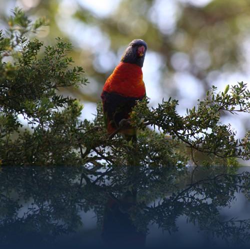 Oliver Weyl australien-natur59.jpg