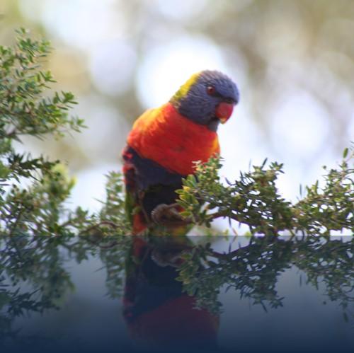 Oliver Weyl australien-natur60.jpg