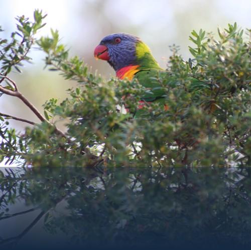 Oliver Weyl australien-natur61.jpg