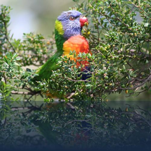 Oliver Weyl australien-natur63.jpg