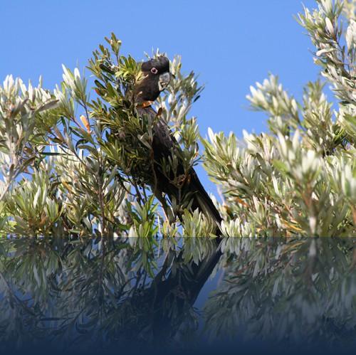 Oliver Weyl australien-natur71.jpg