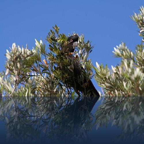 Oliver Weyl australien-natur72.jpg
