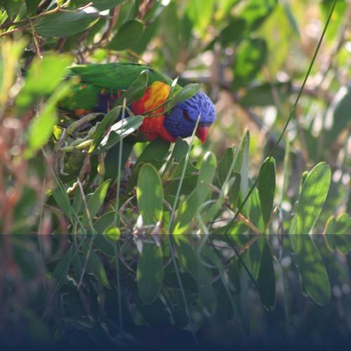 Oliver Weyl australien-natur73.jpg