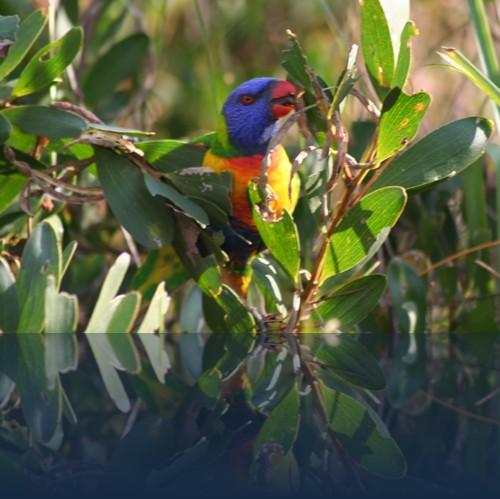Oliver Weyl australien-natur76.jpg