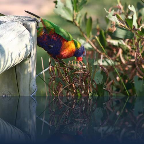 Oliver Weyl australien-natur78.jpg