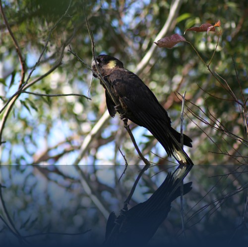 Oliver Weyl australien-natur80.jpg