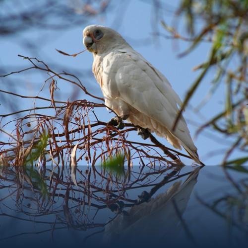 Oliver Weyl australien-natur81.jpg
