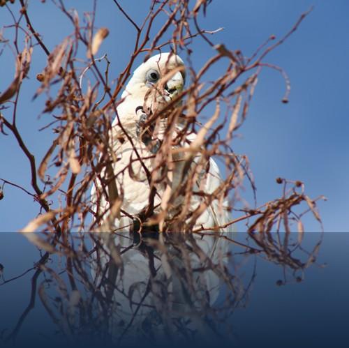 Oliver Weyl australien-natur82.jpg