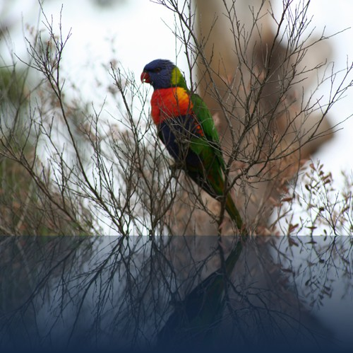 Oliver Weyl australien-natur84.jpg