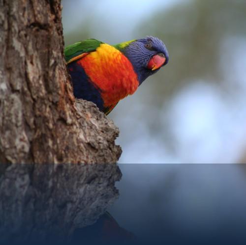 Oliver Weyl australien-natur87.jpg