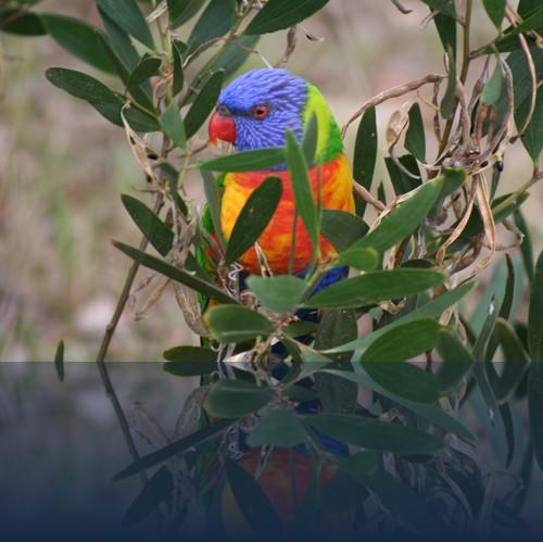 Oliver Weyl australien-natur88.jpg