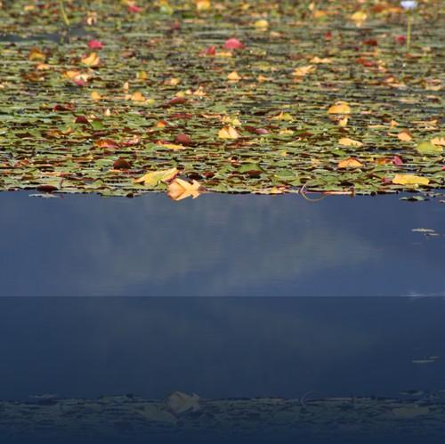 Oliver Weyl australien-natur91.jpg