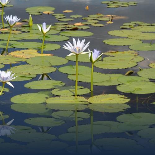 Oliver Weyl australien-natur93.jpg