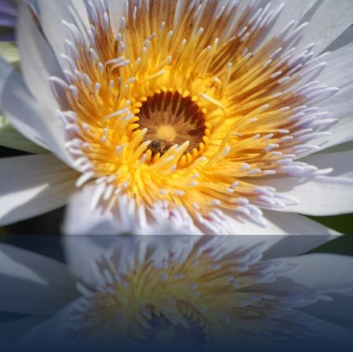 Oliver Weyl australien-natur95.jpg