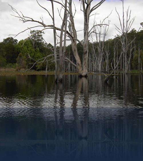 Oliver Weyl australien3.jpg