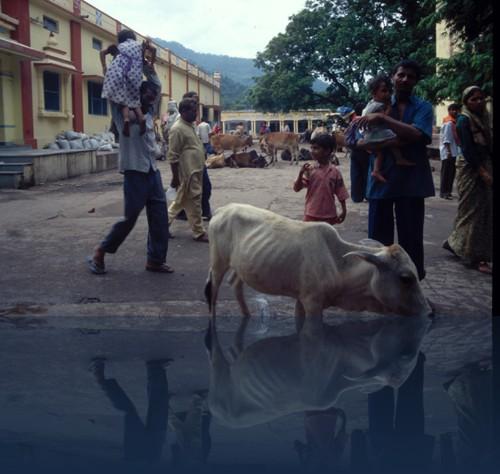 Oliver Weyl indien113.jpg
